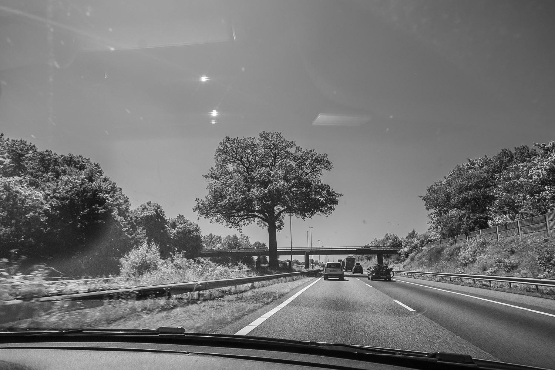 Troeteleik, Ulvenhout, Brabant