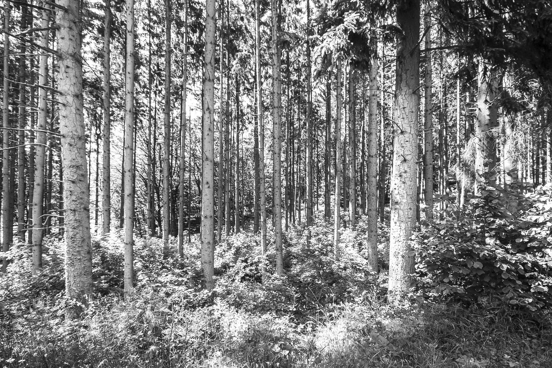 Ardeens bos, Ardennen