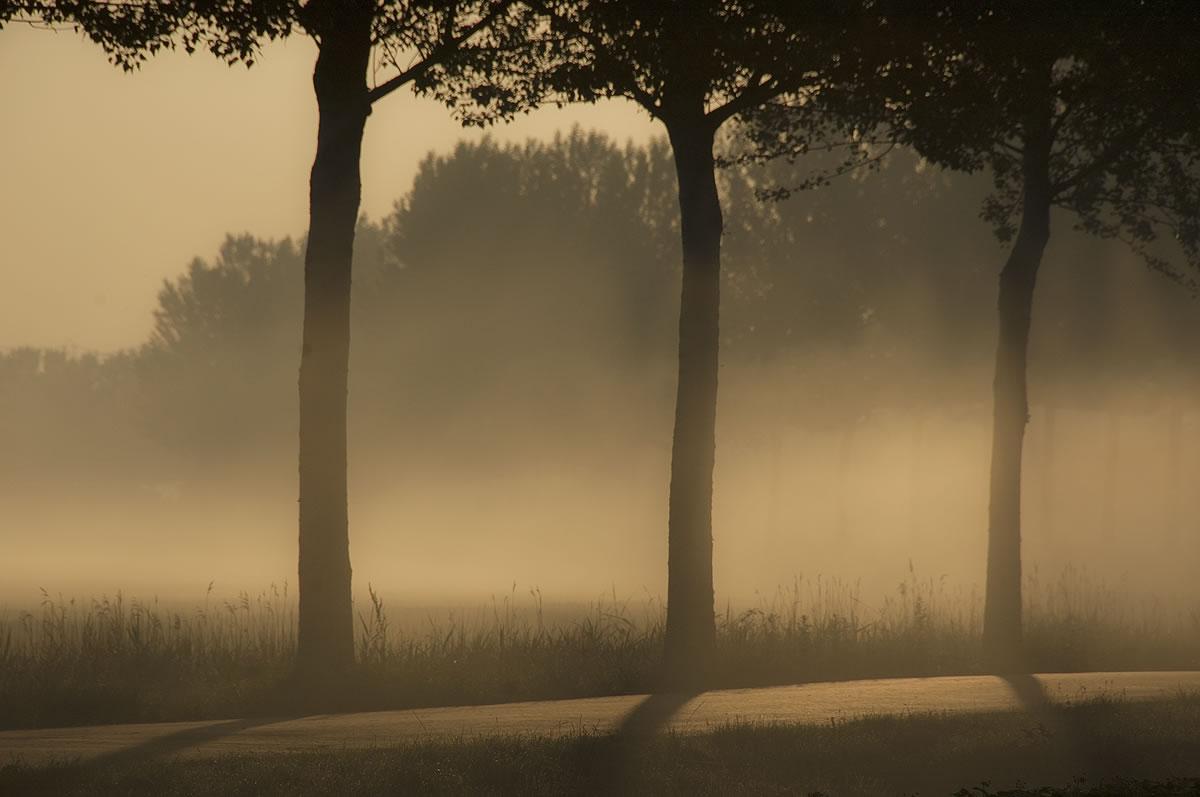 Polder de Biesbosch Dordrecht